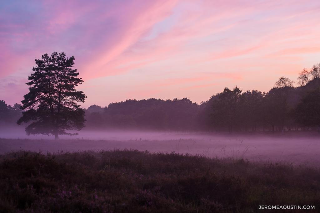 Heather Dream ⋅ Overberg, Netherlands ⋅ 2014