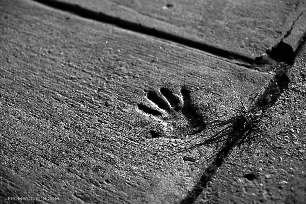 The Hand ⋅ Fleetwood, NY ⋅ 2010
